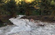 MİKSER'DEN ARTAN BETONU ORMANA DÖKTÜLER, YEŞİLİ KATLETTİLER!..